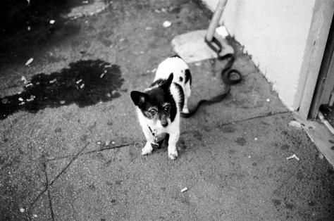 A Newtown Dog