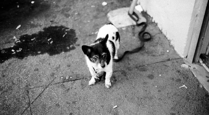 Newtown Dog No. 1