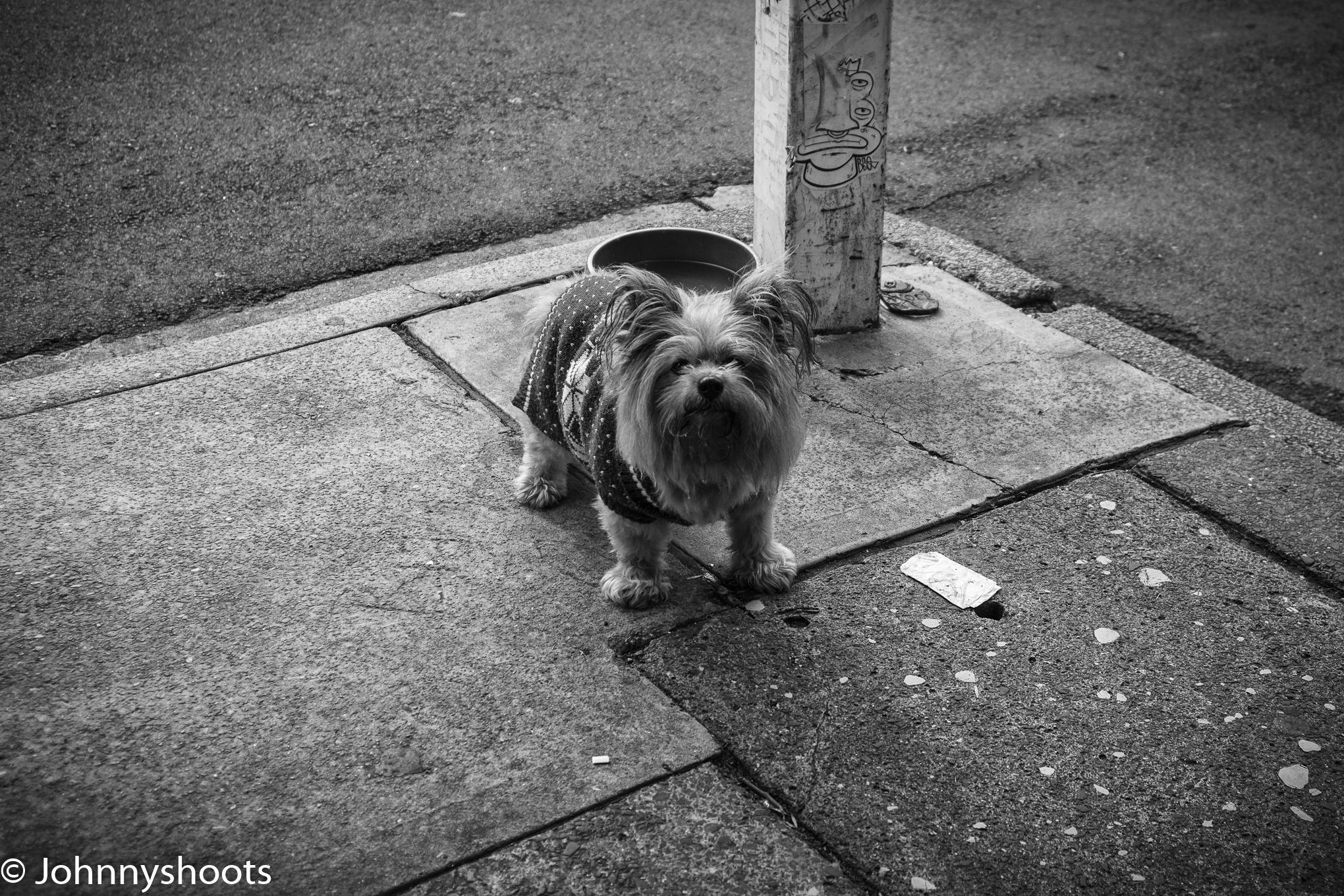 Another Newtown dog shot on the NEX-7
