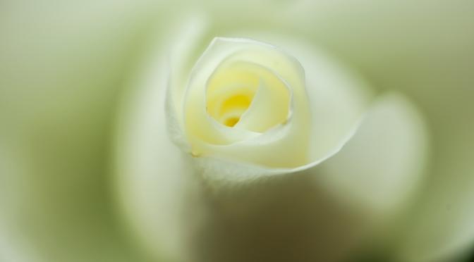 Flower In Phocus